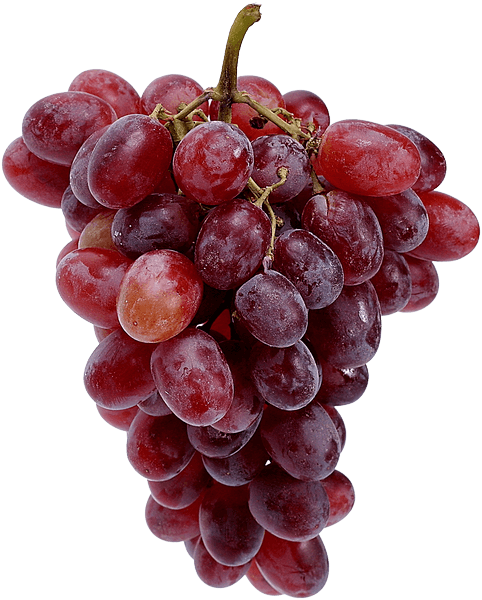 south africa grapes export