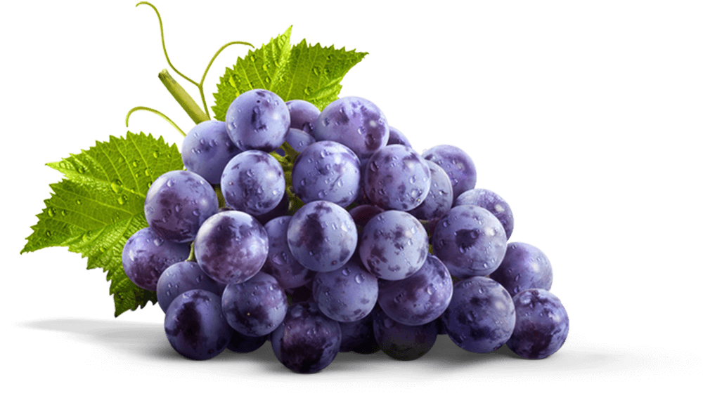 south africa grape export