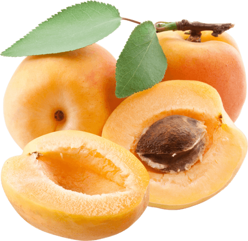 south africa stone fruit export